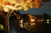 兼六園ライトアップ 秋の段
