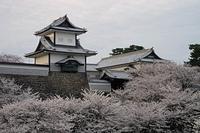 夕陽に照らされた石川門と桜