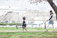 桜並木を散歩する家族