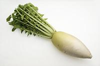 加賀野菜 源助だいこん