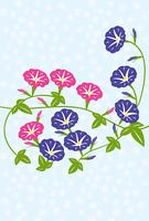 涼しげなアサガオの花のグリーティングカード