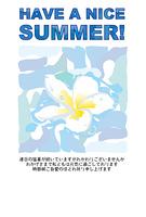 水面のプルメリアの花の暑中見舞い