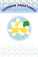ハワイの白い花プルメリアのグリーティングカード