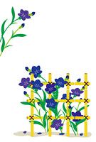 キキョウの花と竹の柵の和風イラスト