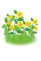 ひまわりの花のハガキ