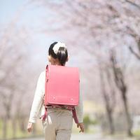 桜並木道を歩く小学生の後姿