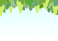 ぶどう畑 緑