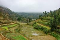 ベトナムの棚田