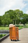 新緑とスーツケース