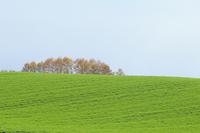 緑の丘とカラマツ林