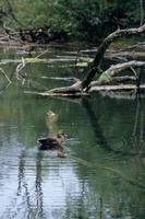 上高地・静寂の池