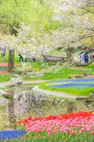 国営昭和記念公園(チューリップ/ムスカリ)