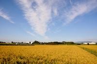 天高く実る秋・稲刈りの季節