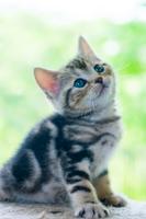 小首を傾げる子猫