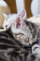 すやすや眠る子猫