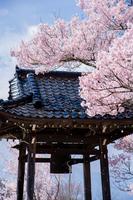 桜吹雪と鐘つき堂