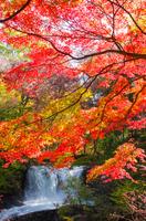 富士吉田市鐘山の滝の紅葉 Autumn leaves of waterfall