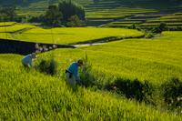明日香村の田園風景