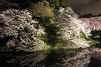 千鳥が淵の夜桜