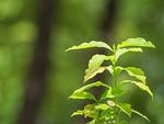 森の中の新緑
