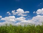 葦原と夏空