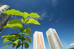 新緑と高層マンション