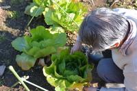家庭菜園/野菜の手入れ