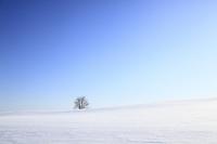 雪原の一本の木