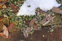 雪が残る庭