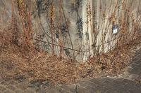 廃墟となったビルの敷地