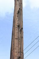 昔の木製の電柱