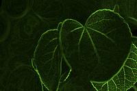 葉のイメージ合成