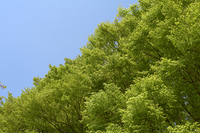 新緑の木々と青空