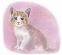 茶トラの子猫