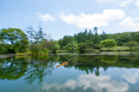 八千穂高原・駒止池のトンボ