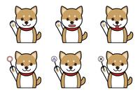犬の表情(笑う、笑顔、質問、回答)