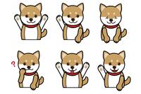 柴犬の表情のバリエーション