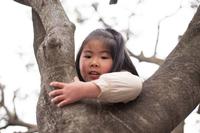 木登りをする少女