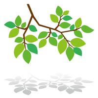 木の枝 新緑