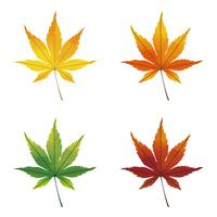 水彩画風 紅葉の葉
