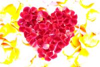 バラの花びらのハート