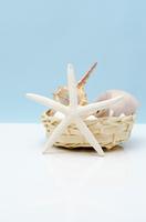 ヒトデとカゴの中の貝殻