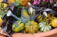 植木鉢の中のジョウロとカボチャ