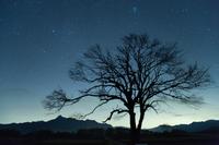 野辺山高原・星空と山梨の木