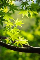 横浜三渓園・木陰の新緑