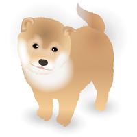 犬 年賀状 かわいい アイコン