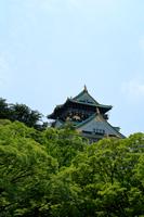 新緑の大阪城