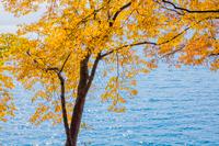 中禅寺湖と紅葉の木