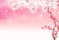 桜 年賀状 春 背景