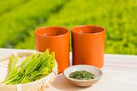 新茶の茶葉と湯呑みと茶畑